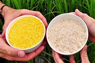 صفات تغییریافته ژنتیکی در محصولات تراریخته تجاری